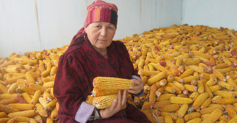 #Kyrgyzstan Bans All #GMO Products, Plants, and Imports - Live Free, Live Natural | Messenger for mother Earth | Scoop.it