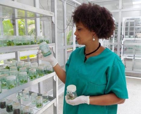 Biotecnología en favor de la reforestación | CIBIOGEM | Scoop.it