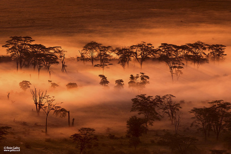 Guest post: Nikon D800 goes wild in Africa   Nikon Rumors   Everything Photographic   Scoop.it