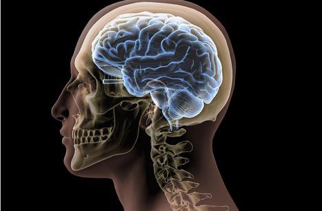 El cerebro decide cuánto vivirás | Salud Visual 2.0 | Scoop.it