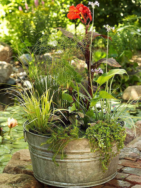 How to Create a Water Garden in a Weekend   Annie Haven   Haven Brand   Scoop.it