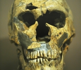 Could You Beat Up a Neanderthal? | Archaeology News | Scoop.it