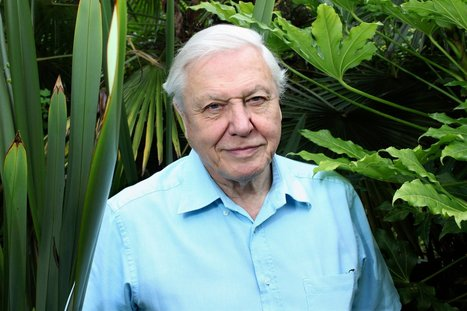 Sir David Attenborough: Enough With the Creationists and Climate Change Deniers! | Interesting Reading to learn English -intermediate - advanced (B1, B2, C1,) | Scoop.it