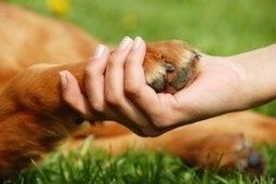 Massage Therapy School Going to the Dogs? | Dogs and People | Scoop.it