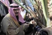 Saudi Gazette - Nation   Le charançon rouge du palmier sous surveillance !   Scoop.it