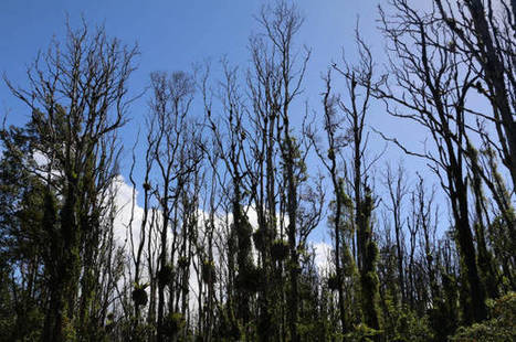 Forests in southern states are disappearing to supply Europe with energy | Woody | Scoop.it