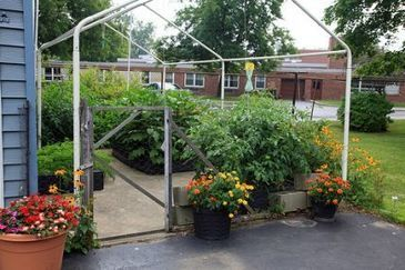 Using Compost and Manure Teas in the Home Garden   Annie Haven   Haven Brand   Scoop.it