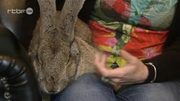 RTBF La Une ⎥La ronronthérapie: se soigner grâce aux animaux | laurencefarine@skynet.be | Scoop.it