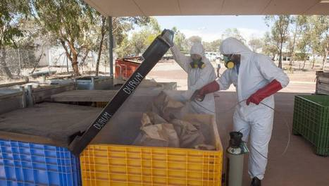 Growers warned to check silos for pests   Grain Handling and Storage   Scoop.it