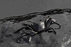 Exxon confirms oil spill in Bass Strait | Oil Spill | Scoop.it