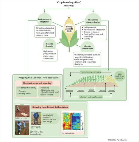 TrendsInPlantSci: Field high-throughput phenotyping: the new crop breeding frontier | FilFallt | Scoop.it