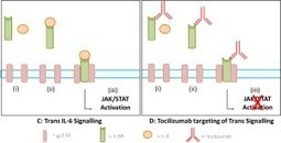 Cost and Time Effective Approach to Early Stage Biosimilar Development: A Case Study of Tocilizumab   Immunology and Biotherapies   Scoop.it