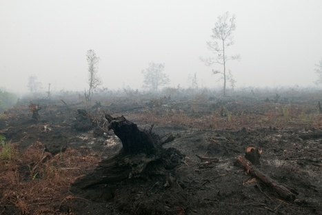 Indonesian Palm Oil Pledge disbands | Responsible Sourcing | Scoop.it