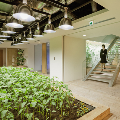 Pasona Urban Farm by Kono Designs | Aspect 1 | Scoop.it