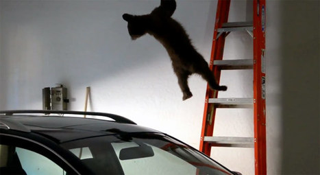 Cub trapped in garage rescued by mama bear | The DATZ Blast | Scoop.it