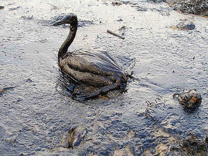 Mapping out the chronic effects of silent oil spills | All about water, the oceans, environmental issues | Scoop.it