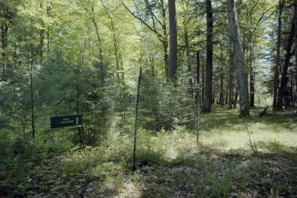 Deer account for almost half of long-term forest change, study finds | Timberland Investment | Scoop.it