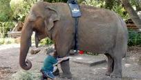 Massage therapy for Perth Zoo elephant - TopNews United States | Massage Therapy | Scoop.it