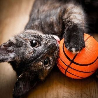 Hermitage No Kill Cat Shelter hosts March Madness special | KVOA (TV-Channel 4 Tucson) | CALS in the News | Scoop.it