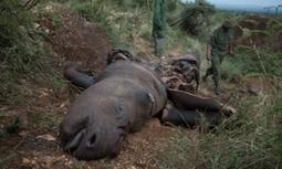 Kenya opens $100m wildlife forensic lab to help prosecute poachers | What's Happening to Africa's Rhino? | Scoop.it