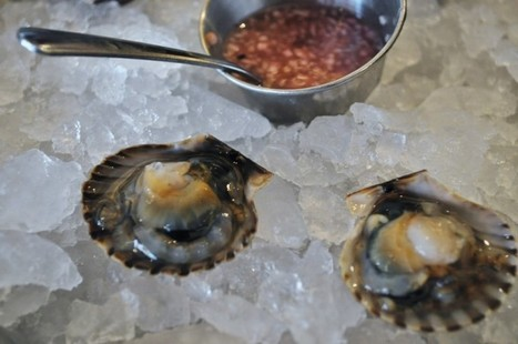 Bay Journal - Article: Rediscovering a taste for Chesapeake scallops | Changing Chemistry - The People Impacted by Ocean Acidification | Scoop.it