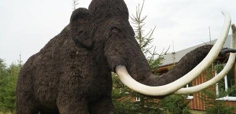 Les mammouths pourraient devenir une espèce protégée | Biodiversité | Scoop.it