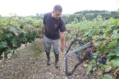 Les pales plient les vignes | Mes Hautes-Pyrénées | Scoop.it