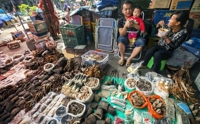 Q&A: Endangered wildlife trading at the Myanmar-China border | Wildlife Trafficking: Who Does it? Allows it? | Scoop.it