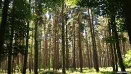 Deux Anglais font chanter la forêt | reforestation et lutte contre la déforestation | DESARTSONNANTS - CRÉATION SONORE ET ENVIRONNEMENT - ENVIRONMENTAL SOUND ART - PAYSAGES ET ECOLOGIE SONORE | Scoop.it