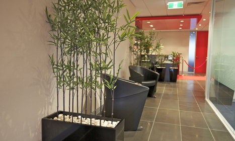 Indoor Plants Melbourne, Renting Charming Plants to Corporate Sector | Inscape Indoor Plant Hire | Scoop.it