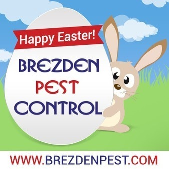 Easter Bunny Good – Easter Pests Bad! | Business And Marketing | Scoop.it