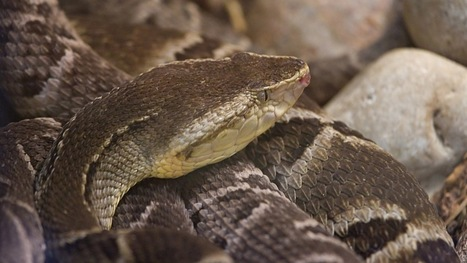 Hydrogel infused with snake venom stops bleeding within seconds | Longevity science | Scoop.it