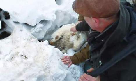 Snow-Hit Sheep Farmers Fear Worse Is To Come | City Talk 105.9 FM | Sustain Our Earth | Scoop.it