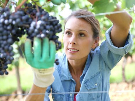 Viticulteur et vigneron : connaissez-vous la différence ? | Agriculture, horticulture, pêche, sylviculture, viticulture, travailler avec les animaux | Scoop.it