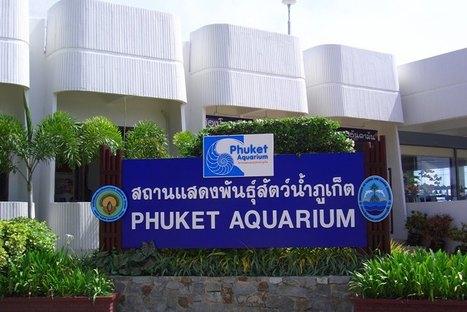 Bloggang.com : : seenil - Phuket  Aquarium   KM   Scoop.it