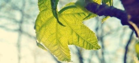 Inviter l'éolien à la ville  | ZEBREA | Sustainability - Living Eating Working Traveling | Scoop.it