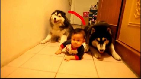 Cachorros gatean | Videos provida | Scoop.it