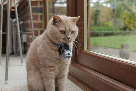 The Secret Life of the Cat: BBC's Horizon programme finds out what household moggies really get up to after dark | A Cat's Life | Scoop.it