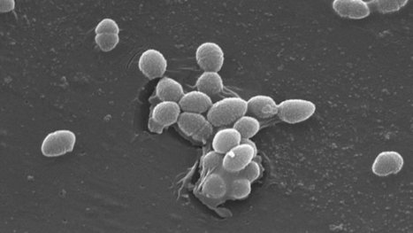 Our Microbiome May Be Looking Out for Itself   Sustainable Futures   Scoop.it