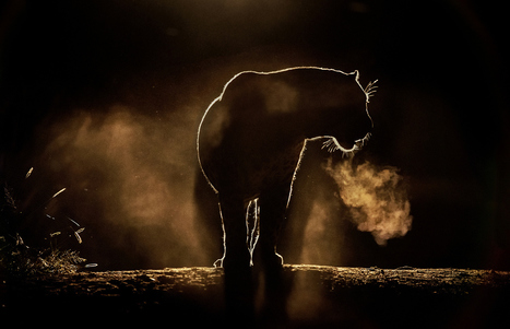 21 of the Most Beautiful Wildlife Photos on 500px | News, Tools and Resources for Teaching and Learning in an Academy of Earth & Space Science | Scoop.it