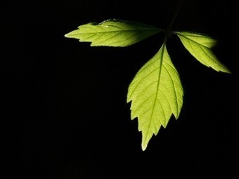 How to Go Green: Why to Go Green | nature | Scoop.it
