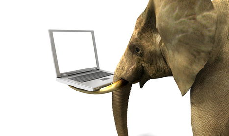 The elephant in the chat room: will international students stay at home? | TRENDS IN HIGHER EDUCATION | Scoop.it