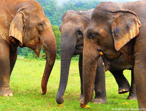 Travel the World: Playing with Elephants at Elephant Nature Park in Chiang Mai | Travel | Scoop.it