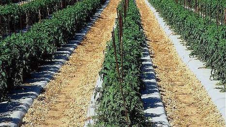 Terrena investit 100 millions dans ses sites - Agro Media | Actualité de l'Industrie Agroalimentaire | agro-media.fr | Scoop.it