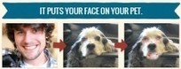 Montage photo : fusionnez votre visage avec celui d'un animal | Retouches et effets photos en ligne | Scoop.it