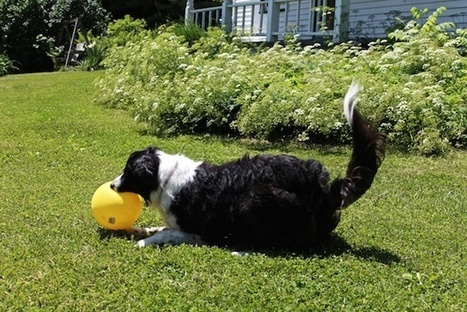 Pointing Out The Contribution of Both Nature and Nurture | Modern dog training methods and dog behavior | Scoop.it