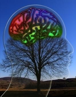 Warum der Neurodeterminist irrt | Weiterbildung | Scoop.it