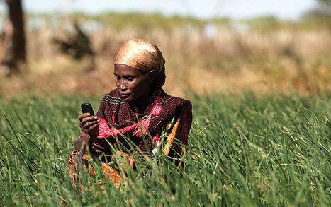 TIC et agriculture : pour mieux informer et accompagner les agriculteurs ! - Terangaweb | L'Afrique des idées | Mediafrica | Scoop.it