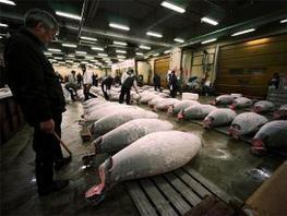 """Ocean fish numbers on """"brink of collapse"""": #WWF #overfishing 