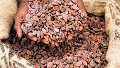 Healthy chocolate? The growing evidence for cocoa flavanols | Just Chocolate!!! | Scoop.it